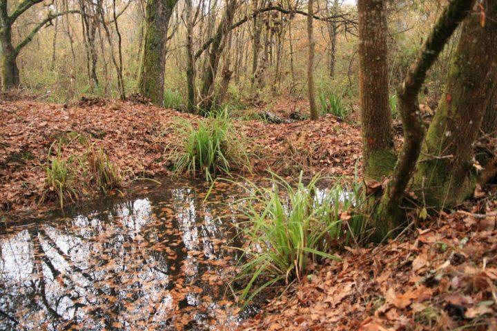 Debate sobre Serviços dos Ecossistemas e o impacto na gestão florestal