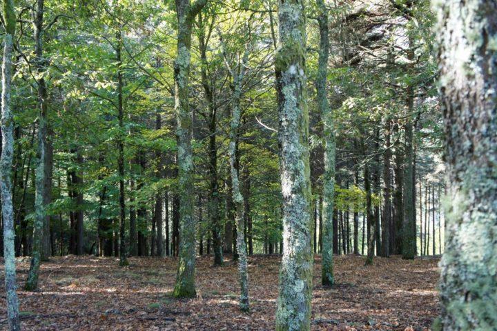 IPC em projeto de valorização da fileira florestal da região Centro